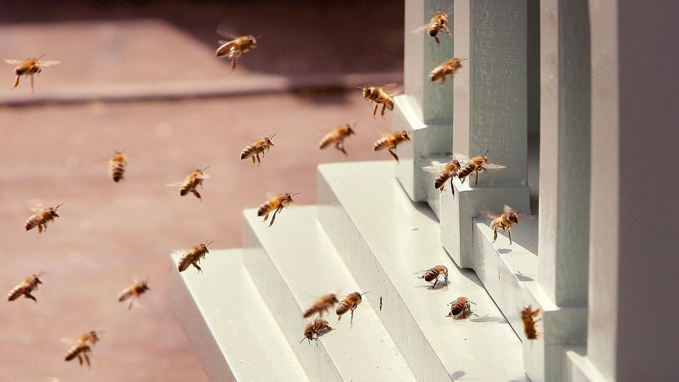 Some firms are looking to the collective decision-making of bee swarms to help humans work together better (Credit: Getty Images)