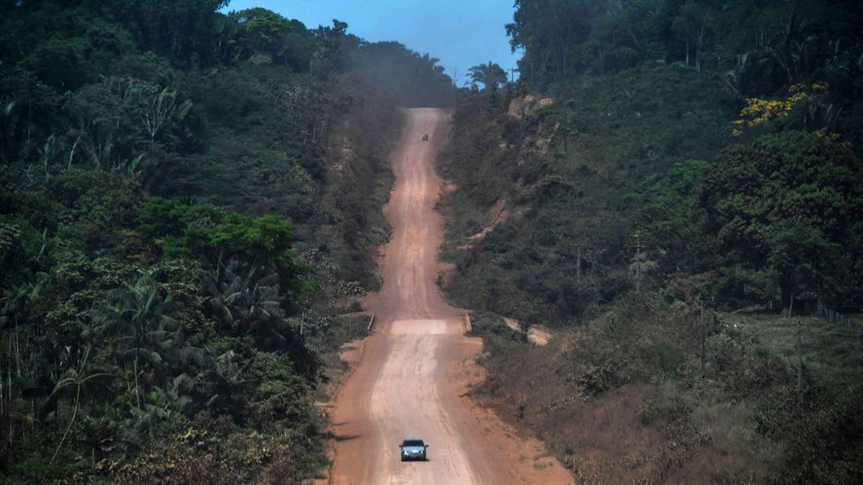 Illegal loggers have made use of lockdown to exploit the Amazon rainforest (Credit: Getty Images)