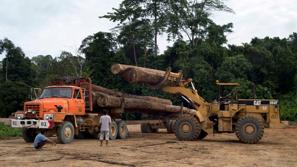 Indonesia has already been intensively deforested, which fuels the nation's long and deadly forest-fire seasons (Credit: Getty Images)