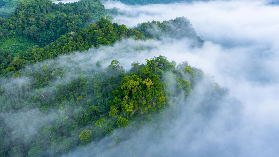 Rainforest covered in mist (Credit: Getty Images)