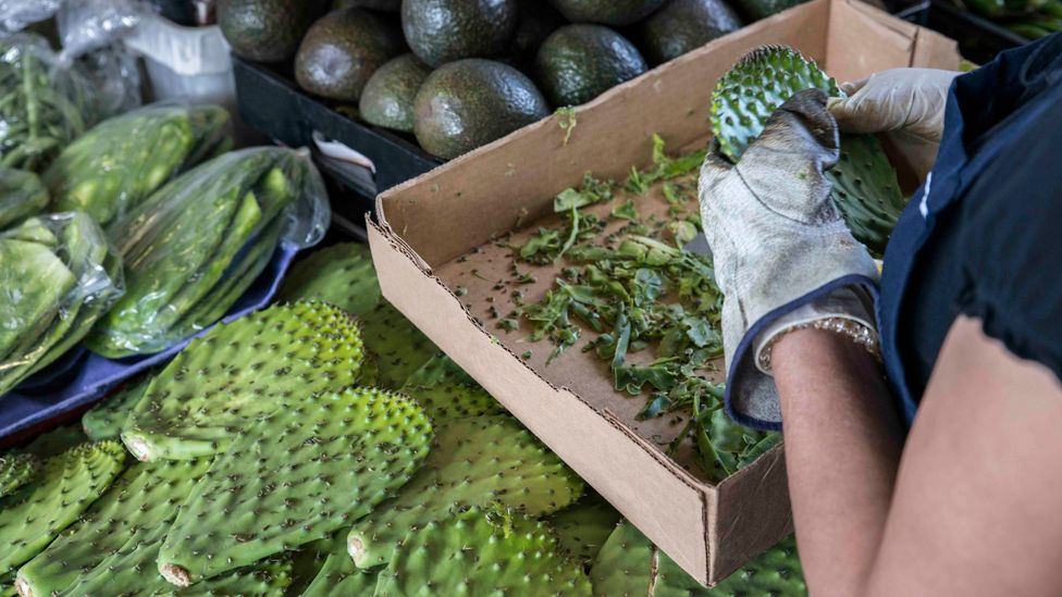 Nopal is used in a number of traditional Mexican dishes, but a lot of the inedible plant matter is thrown away (Credit: Getty Images)