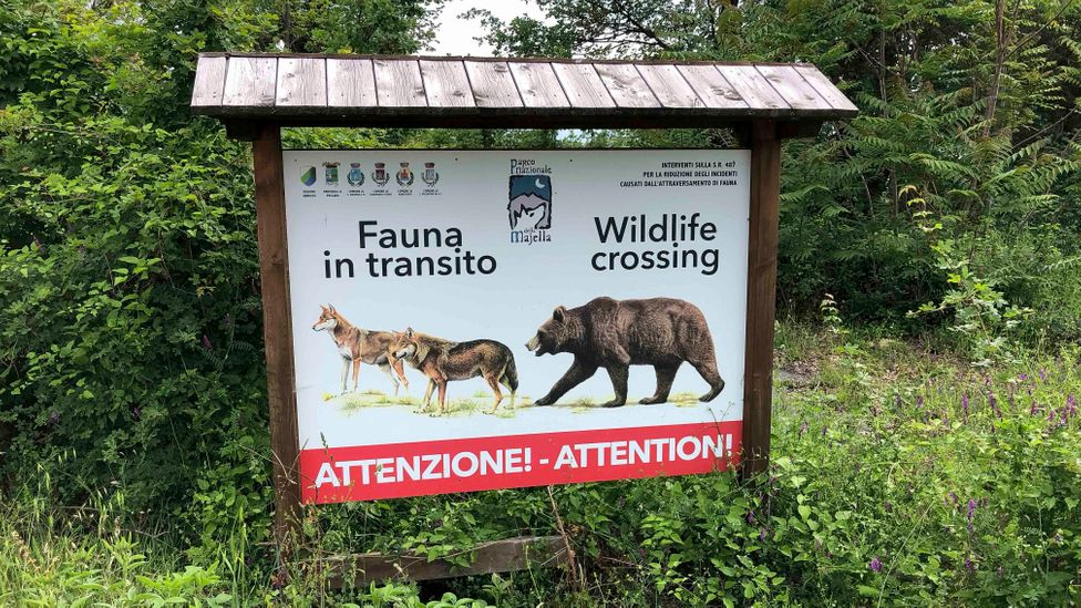 Conservation efforts in Italy have been hampered by the approach to wilderness adopted after World War Two (Credit: European Wilderness Society)