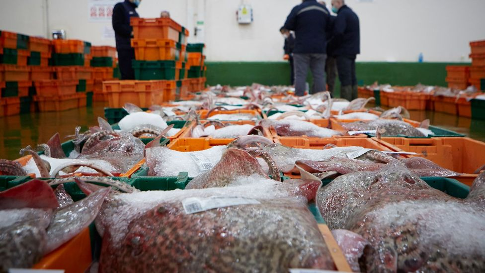A digital system used to trace fish as they pass through one of Spain's largest ports has helped keep it operating during the Covid-19 pandemic (Credit: Vigo Port Authority)