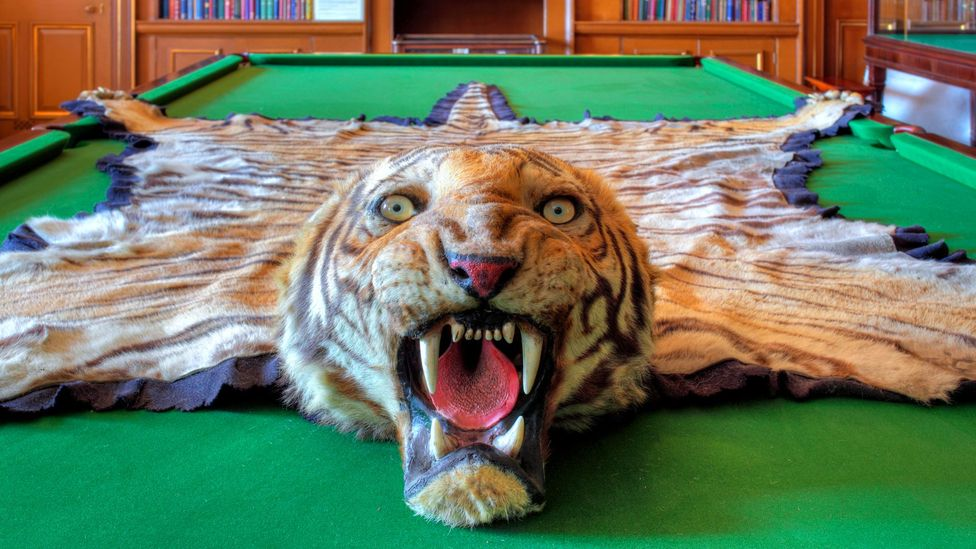 A tiger rug at the Curzon home, Kedleston Hall; while Viceroy of India, Lord Curzon decided to partition Bengal in 1905 (Credit: Alamy)