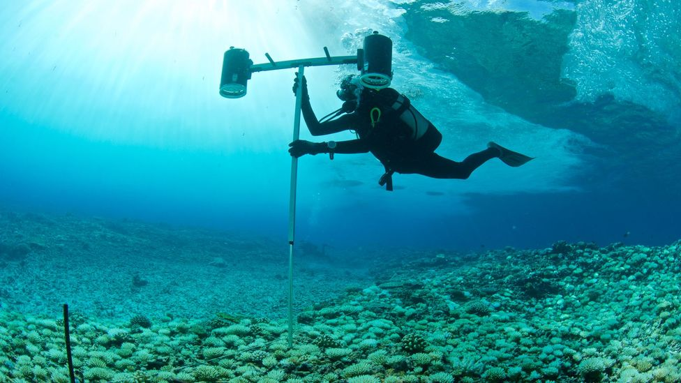 The nature swap involved mapping the oceans around the Seychelles, to find the areas with the greatest biodiversity (Credit: Getty Images)