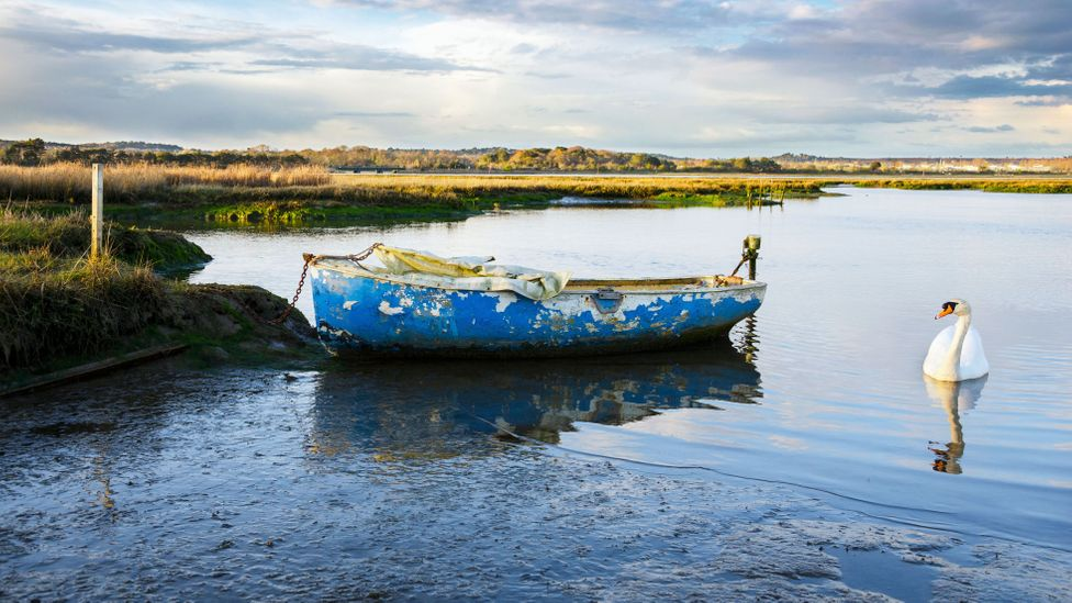 Natural habitats such as saltmarshes are an effective protection from the sea, and support a wide range of species (Credit: Alamy)