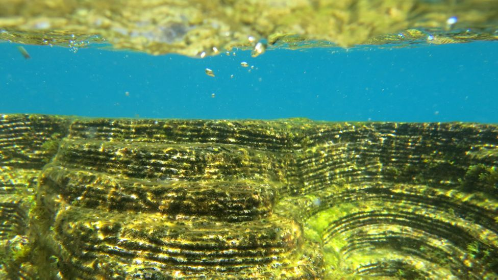 Adding ridges to concrete blocks is thought to help boost colonisation of marine life, but how effective it is depends on the nuances of the local environment (Credit: ECOncrete)