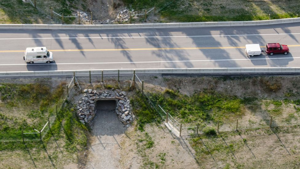 Underpasses, such as this one in Canada, can be enough to provide safe passage for a number of large animals (Credit: Parks Canada)