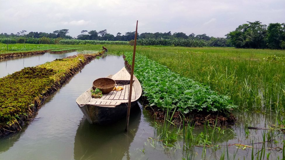 The historic practice of constructing floating gardens has been part of regional heritage in southern Bangladesh for centuries (Credit: Fahmida Akter)
