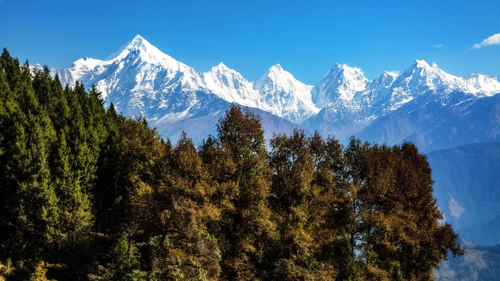 The mountains of Uttarakhand are rich in chir pine, which shed needles on the mountainous slopes of the western Himalayas (Credit: Alamy)