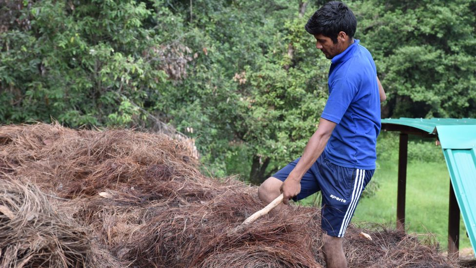 The pine needles are collected and dried before they are fed into the gasifier. It is painstaking work but can provide local people with a reliable income (Credit: Rajnish Jain)