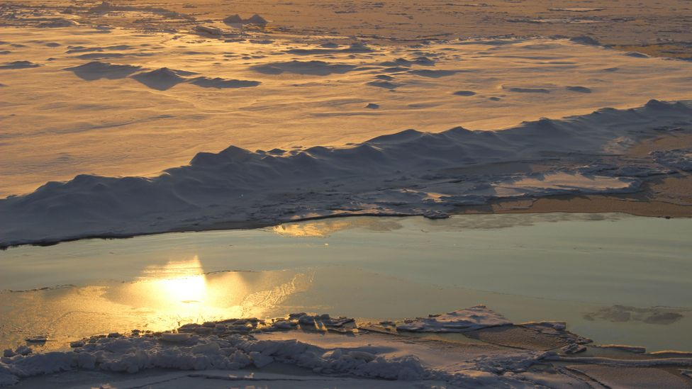 The young, thin Arctic ice is darker and less reflective than the thick, white, old ice – pushing the Arctic into a feedback cycle of warming (Credit: Martha Henriques)