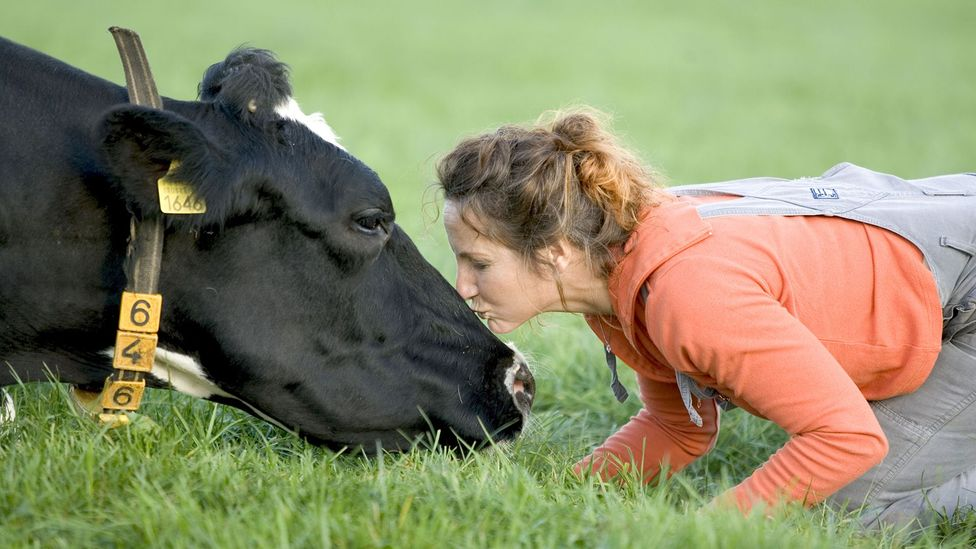 Is cow hugging the world's new wellness trend? (Credit: Catchlight Visual Services/Alamy)