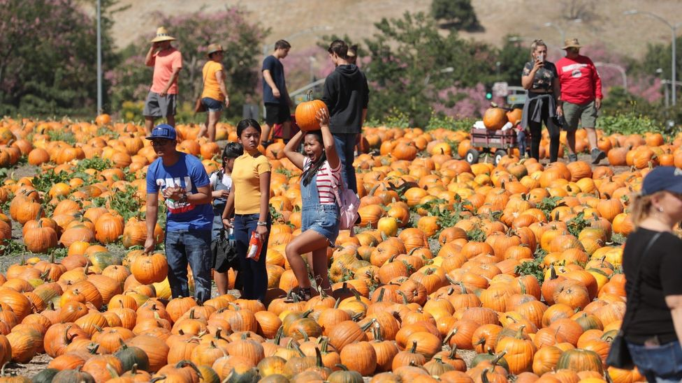 Cal Poly Pomona Pumpkin Festival has taken its business online, offering pumpkin pick-up to customers