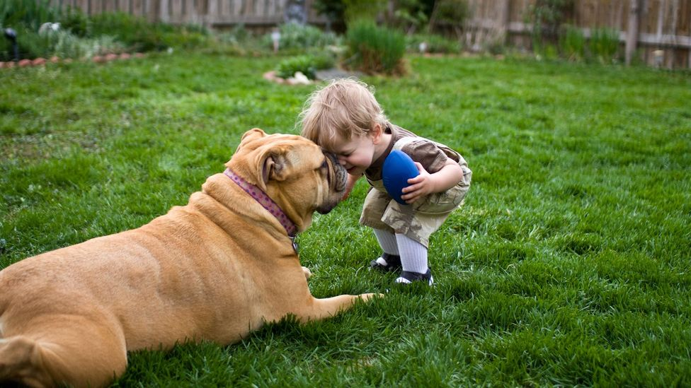 Owning a cat or dog may lower your risk of developing an allergy (Credit: Getty Images)