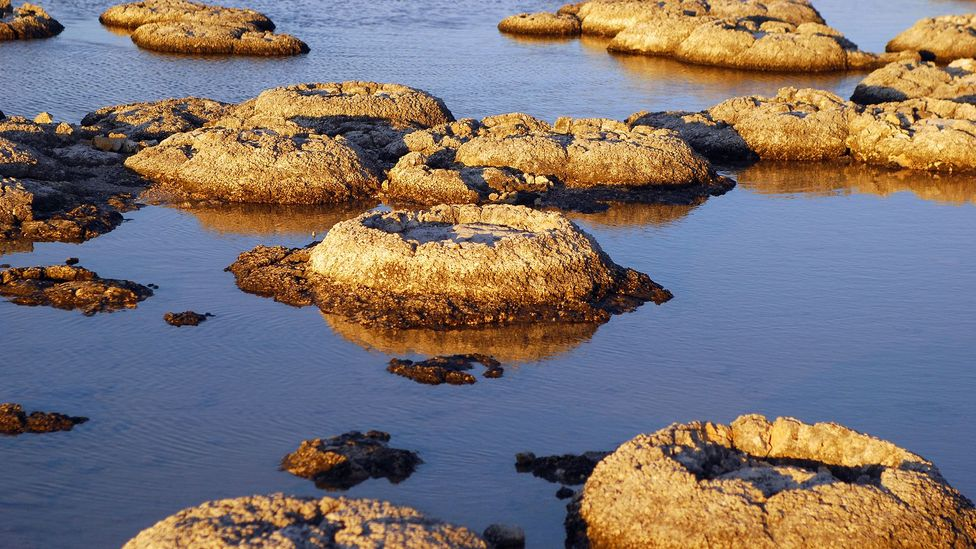 Stromatolites are living fossils and the oldest living lifeforms on our planet (Credit: MaXPdia/Getty Images)