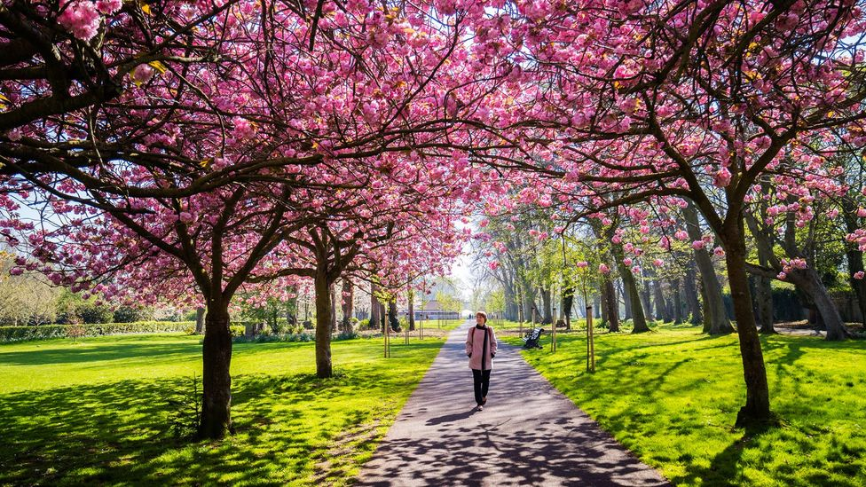 As soon as we leave home - even for a walk in the park - our brain starts paying attention (Credit: David Soanes/Getty Images)