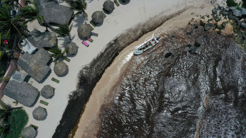The shore of a tourist resort in Mexico turns black with seaweed (Credit: Getty Images)