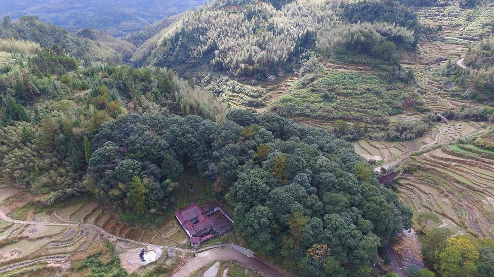 The feng shui forest surrounding the village of Guizhuping has protected it from the elements for 400 years (Credit: Credit: Chris Coggins)