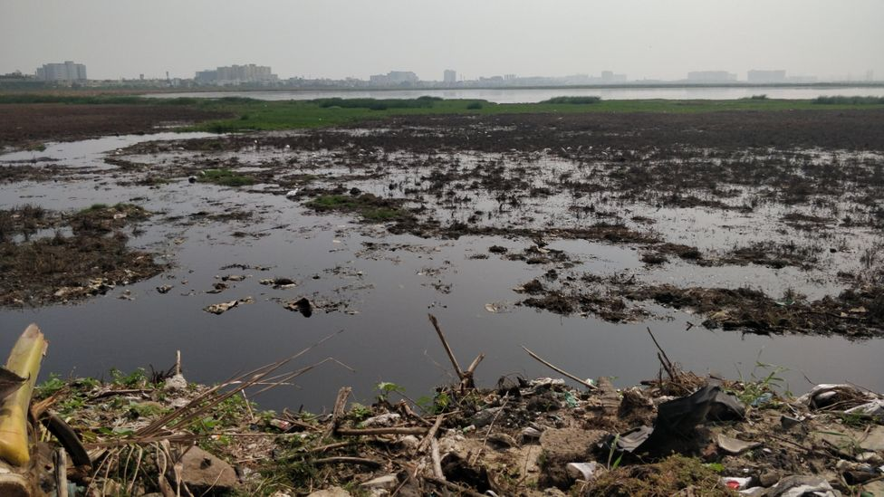 The remaining wetlands of Chennai have been historically encroached upon and polluted with waste dumping (Credit: Kalpana Sunder)