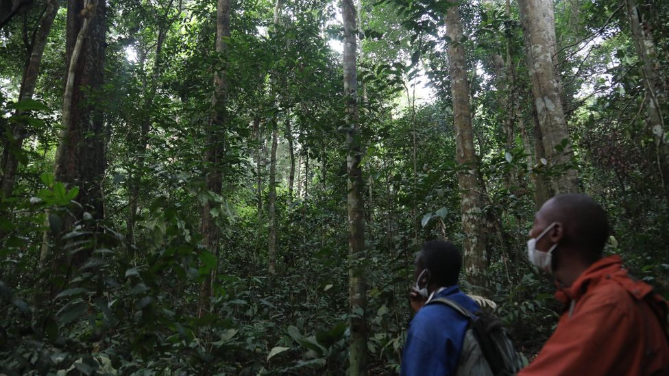 Though there is evidence the concessions lead to sustainable management of the forest, the process for a community to acquire one is complex and expensive (Credit: Peter Yeung)