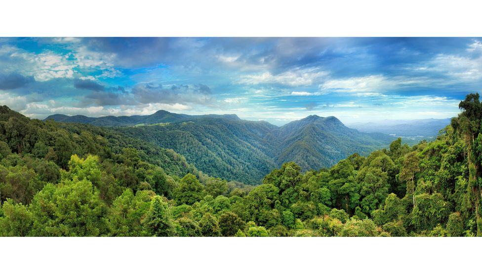 When the supercontinent of Gondwana broke up, fragments drifted all across the globe. Many of its ancient plants still live in the Australian Dorrigo forest (Credit: Getty Images)
