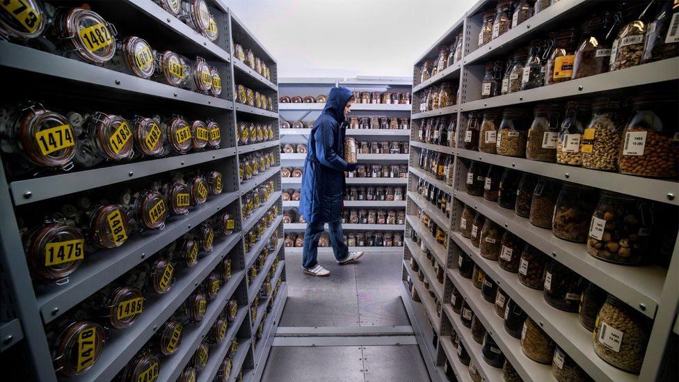 A storage room at the Millennium Seed Bank (Credit: Alamy)