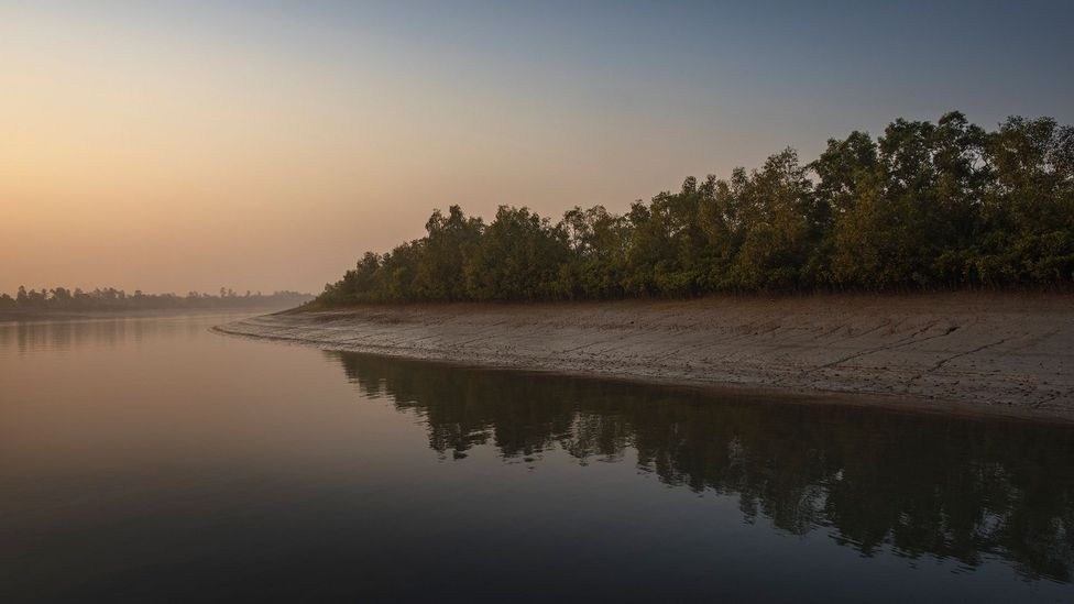 The Sundarbans, in the east of India, is one of the largest remaining wetlands in India (Credit: Jonas Gratzer/Getty Images)