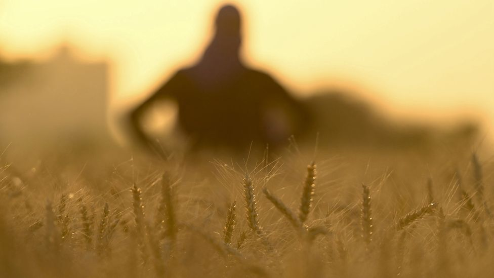 Agriculture is the principal source of N2O emissions from human activity (Credit: Getty Images)