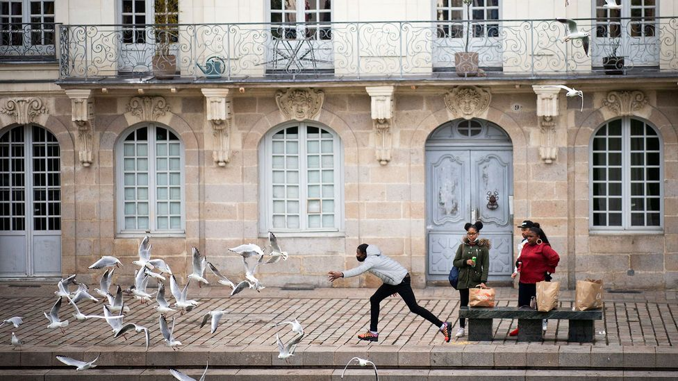 Studies have shown that gulls prefer food that has been touched by humans, but this can also lead them to be a nuisance in some places (Credit: Loic Venance/AFP/Getty Images)