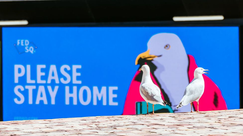 Many human residents of towns and cities are not keen on their new winged neighbours (Credit: Chris Putnam/Barcroft Media/Getty Images)