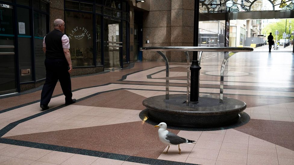 Gulls have made themselves at home in cities that are far from the sea, such as Birmingham, England, where this bird was seen in a shopping centre (Credit: Mike Kemp/Getty Images)