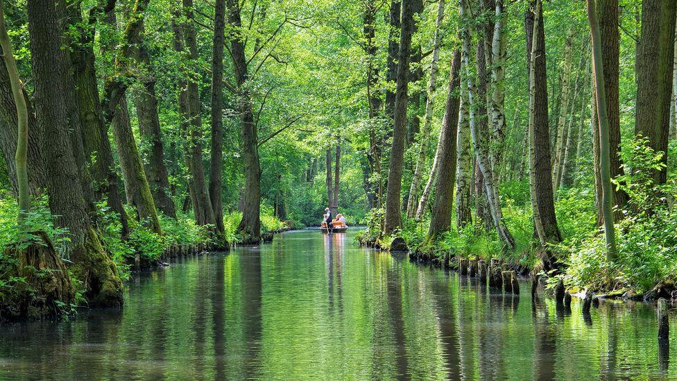 Der Spreewald ist eine Unesco-Biosphäre mit 47.500 Hektar Wiesen, Wäldern und Kanälen mit wenigen Straßen (Bild: LianeM / Getty Images)
