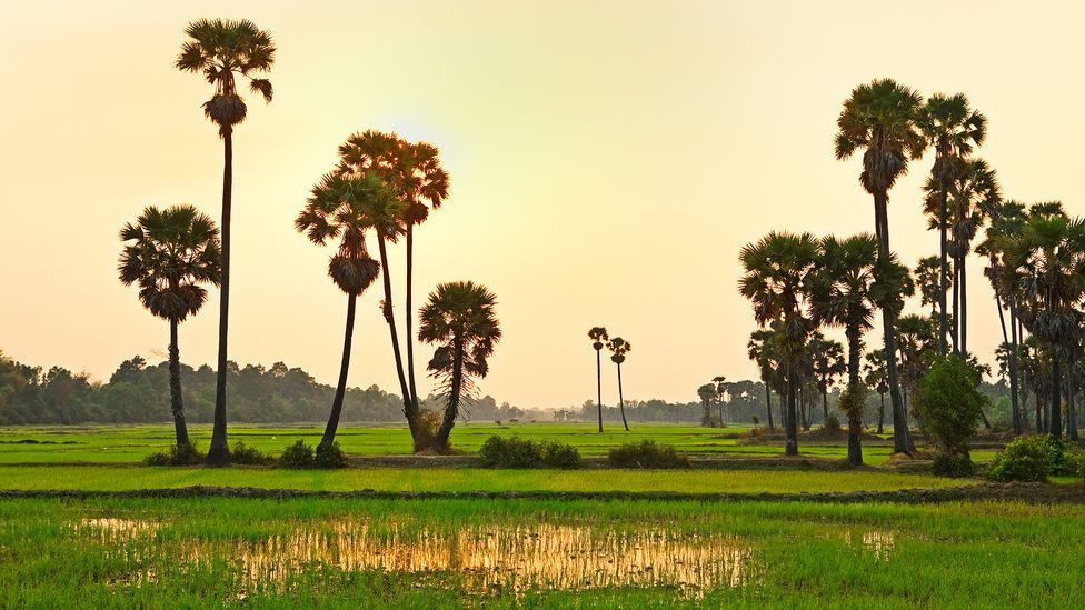 The drive from Siem Reap to Cambodia's centre of sericulture weaves through country villages, past rice paddies (Credit: John W Banagan/Getty Images)