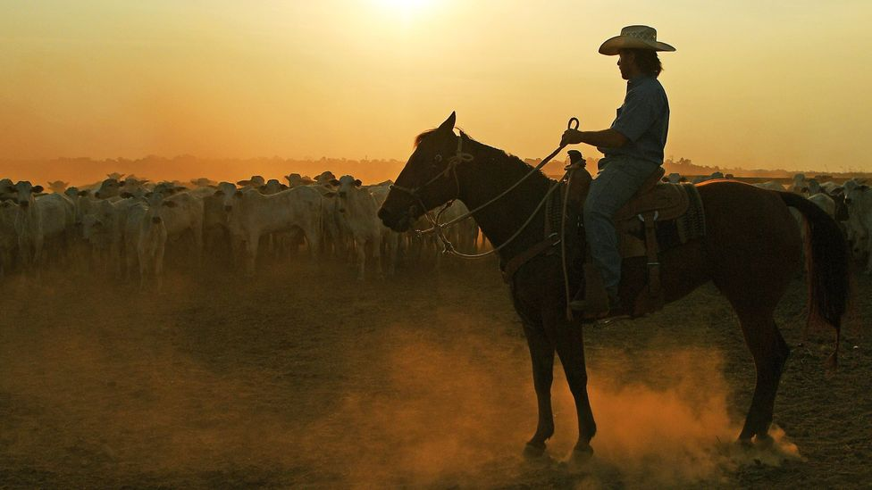 Brazil is the world's biggest exporter of beef, but many of its ranches are in previously forested regions (Credit: Getty Images)