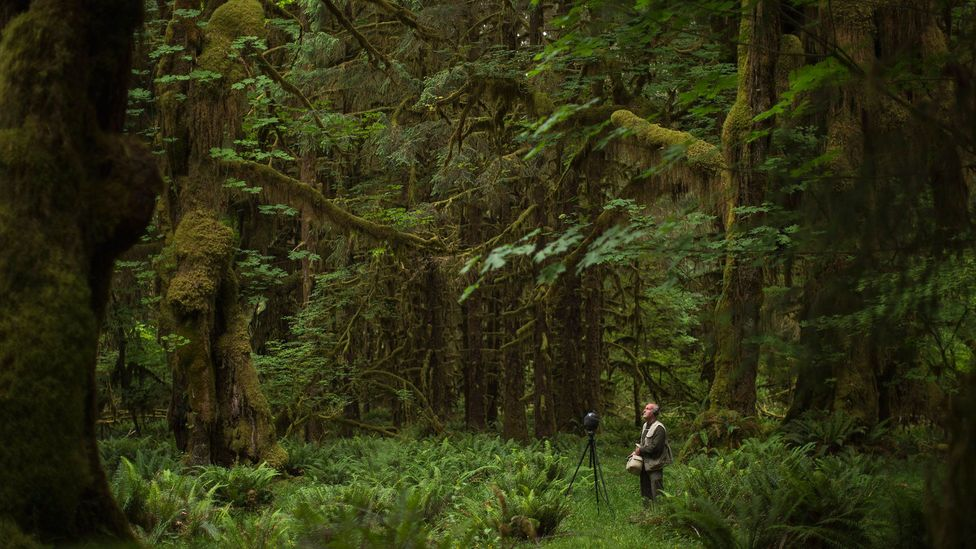 Gordon Hempton records sound in a clearing in the Hoh Rainforest