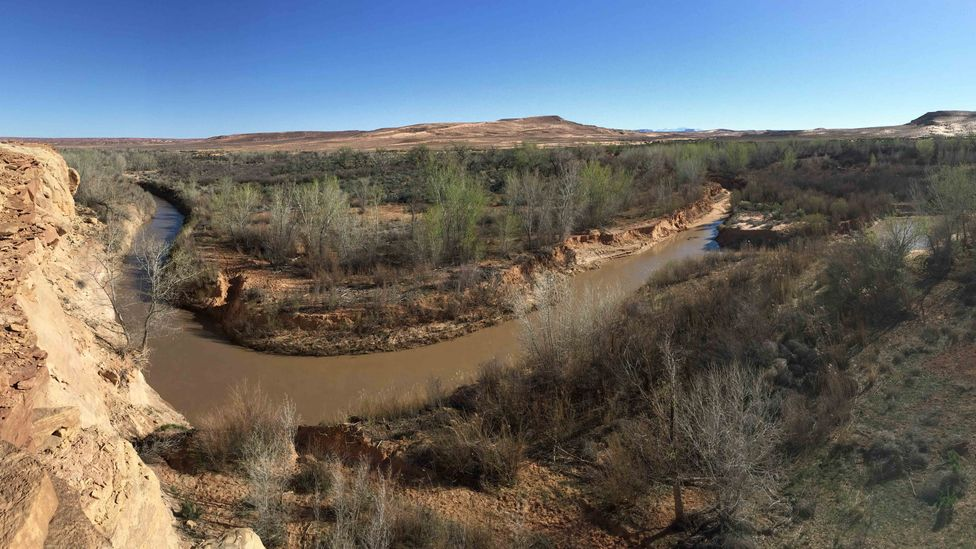 The San Rafael River is one place in Utah's desert where beaver populations can be supported, helping to restore the ecosystem (Credit: Emma Doden)