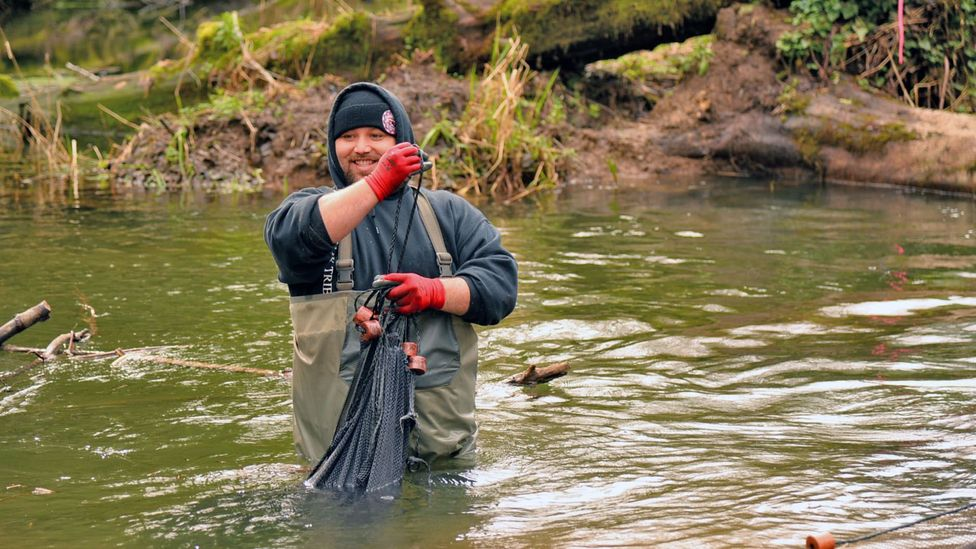 Members of the Yurok Tribe depend closely on the salmon of the Lower Klamath Basin, and monitor the river to track fish populations (Credit: Matt Mais)