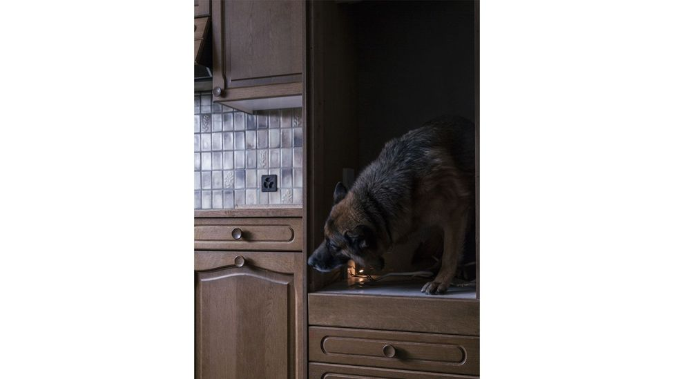 Canine unit's dog looking for drugs, from the series How to Secure a Country, 2014-2018, by Salvatore Vitale (Credit: Salvatore Vitale)