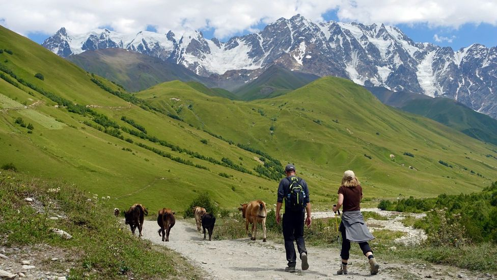 Cows and horses graze in the meadows and grasslands along the route (Credit: Transcaucasian Trail Association)