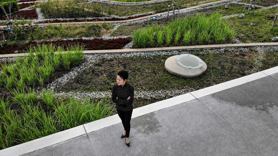 Green roofs provide space for plants, birds and insects in the heart of sprawling cities (Credit: Getty Images)