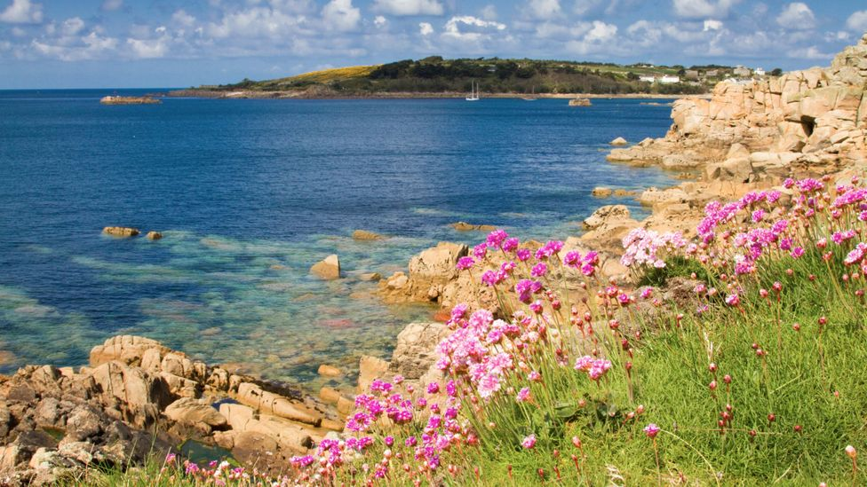Flowers and ocean from St Marys, Isles of Scilly