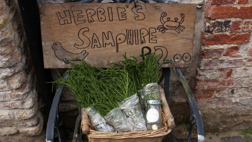 At its best between June and August, samphire is a beloved seasonal delicacy around the Norfolk coast (Credit: Laurence Mitchell)