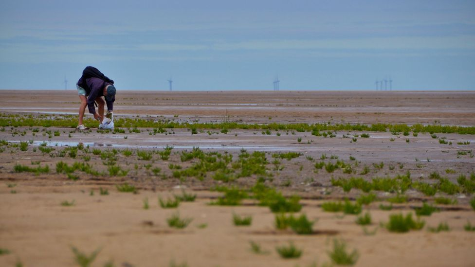 Samphire can be found around Britain, but the best is considered to grow in Norfolk's vast tidal mudflats (Credit: Deveritt/Getty Images)