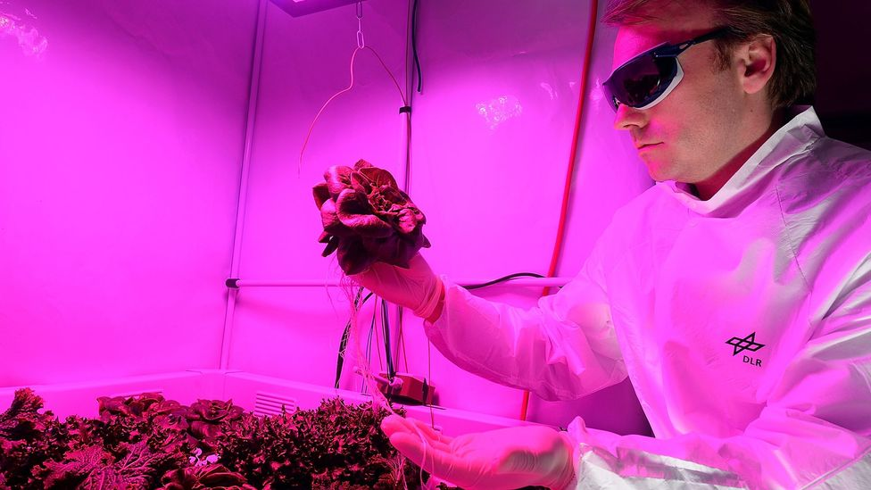 The European Space Agency (Esa) has also conducted experiments into growing salad leaves in space (Credit: David Hecker/Getty Images)