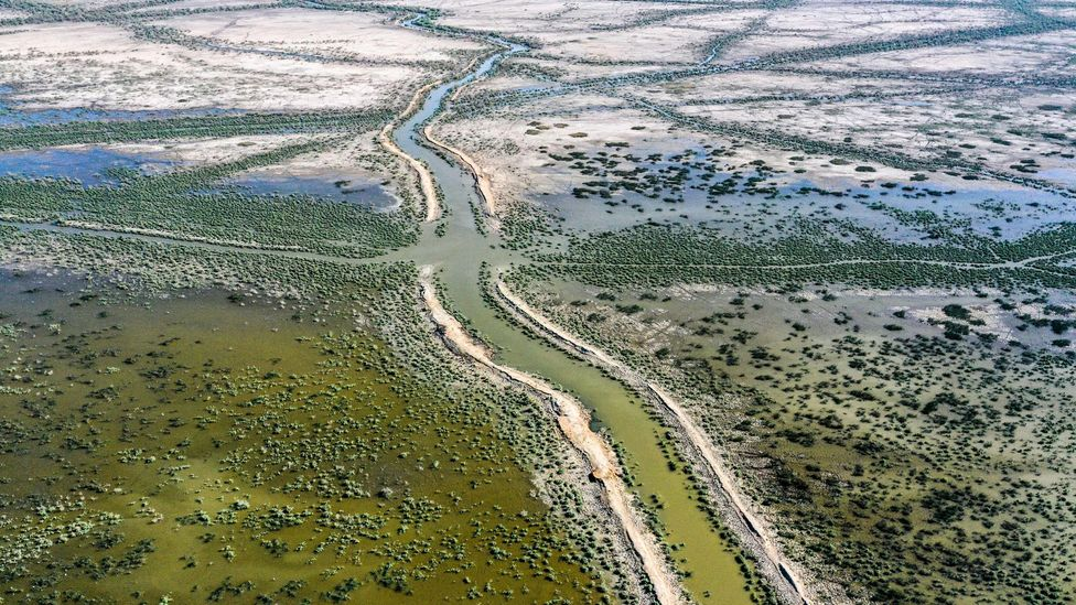 Drought combined with reduced river flows due to dams further upstream are starving the marshlands in Iraq's Ahwar region of water (Credit: Asaad Niazi/AFP/Getty Images)