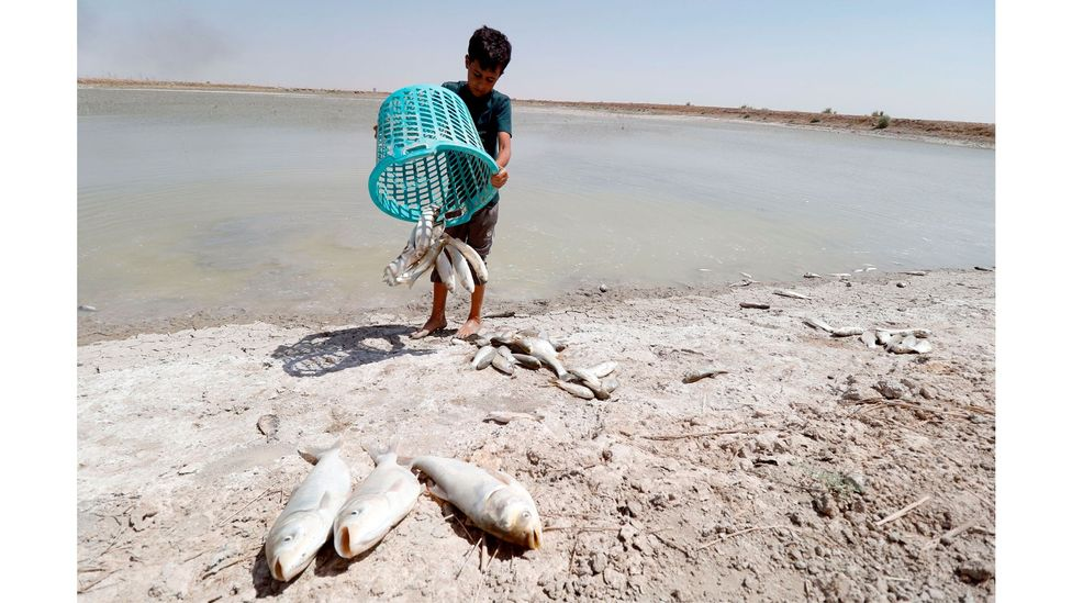 Falling water quality around Basra, southern Iraq, has been exacerbated by reduced river flows due to damming in Turkey (Credit: Haidar Mohammed Ali/AFP/Getty Images)