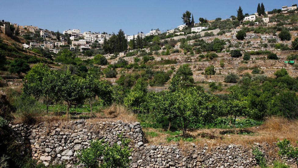 Battir's terraces are rock-walled agricultural plots that have grown olives and vegetables since antiquity (Credit: Eddie Gerald/Getty Images)