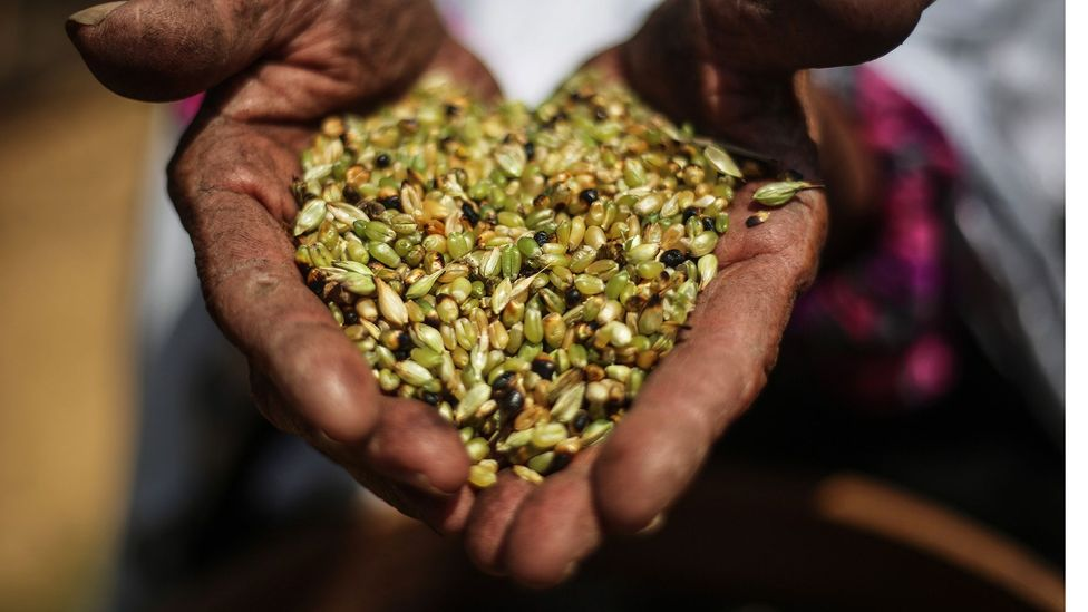 Seeds are living beings, and to see heirloom seeds disappearing is a human tragedy, not just a Palestinian tragedy, said Sansour (Credit: Anadolu Agency/Getty Images)