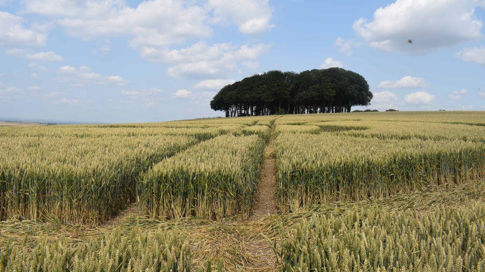 England's crop circle controversy